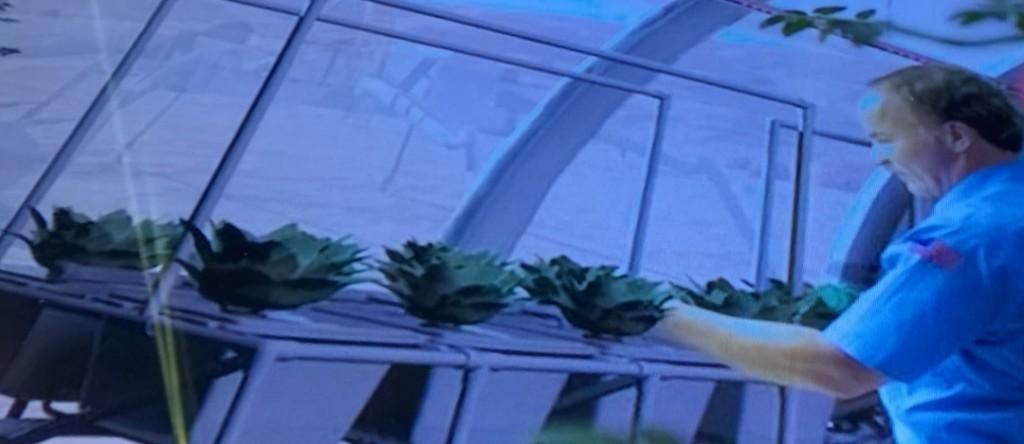 Hydroplantage in de ruimte